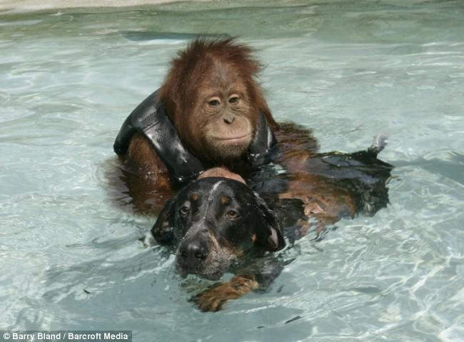 Swimming pals