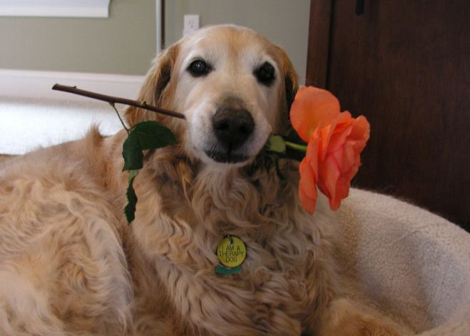 Therapy Golden Maggie