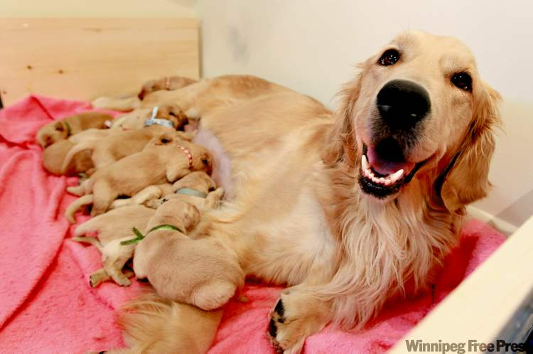 A Labor of Love … 17 Golden babies, oh