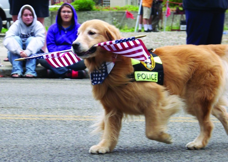 K 9 Golden Retriever He does it all … Upd...